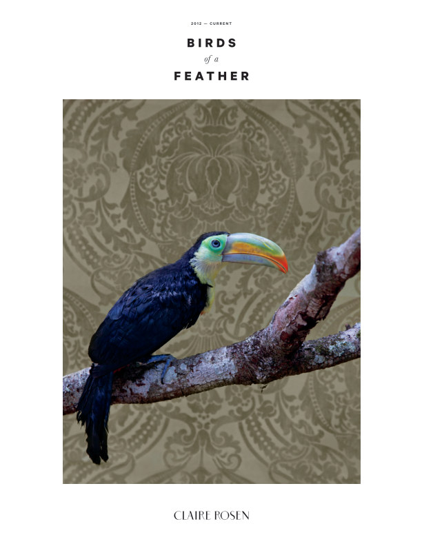 View Birds of Feather by Claire Rosen