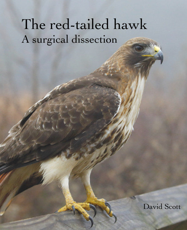 View The red-tailed hawk: a surgical dissection by David Scott