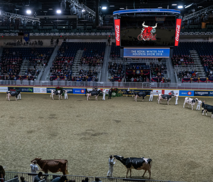 Visualizza The Royal Winter Fair Holstein Show 2018 di The Bullvine