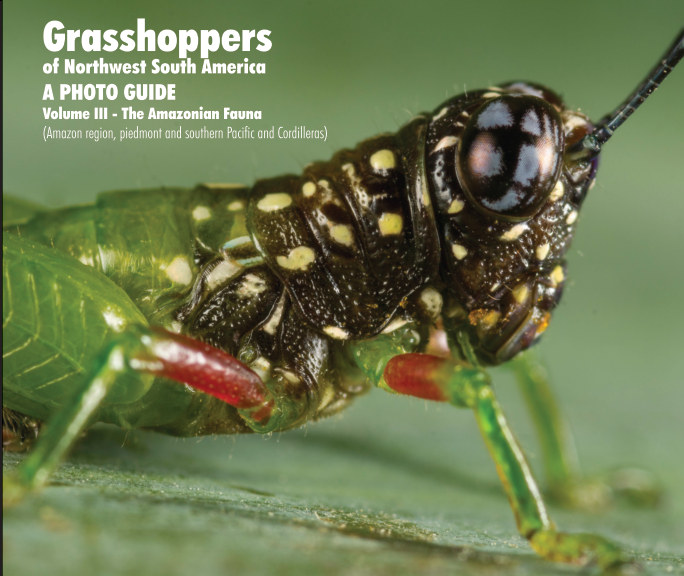 Grasshoppers of Northwest South America 3 nach Juan Manuel Cardona-Granda anzeigen