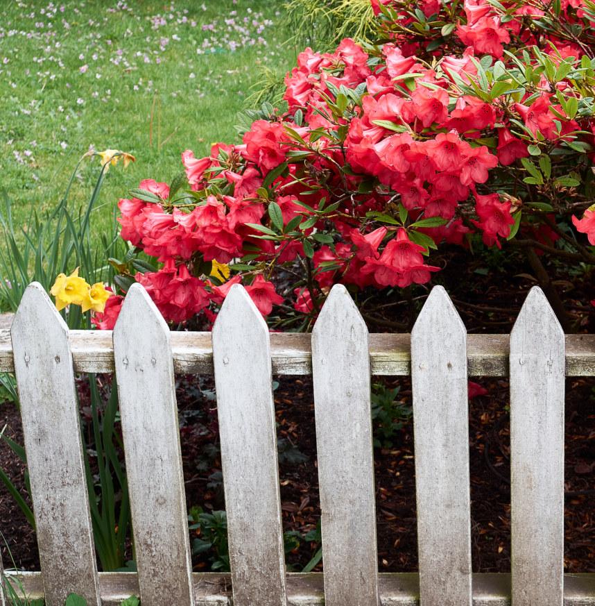 View Fences by John Denniston
