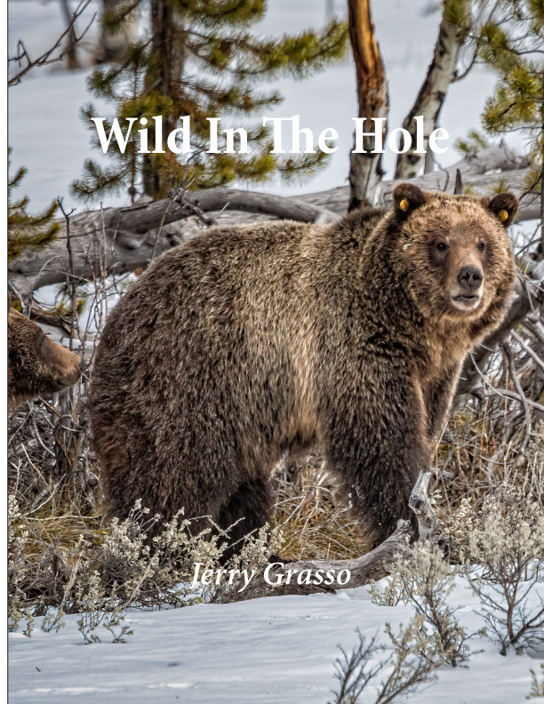 View Wild In The Hole by Jerry Grasso