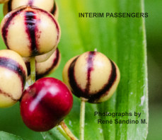 Interim passengers book cover