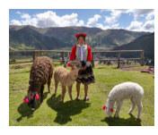 Perú 2014 book cover