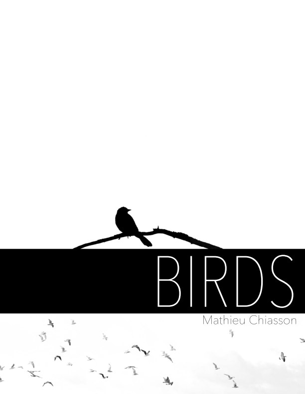 View Birds by Mathieu Chiasson