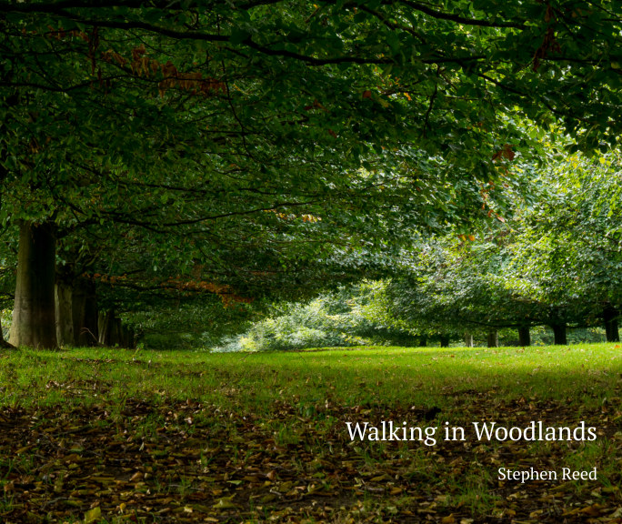 View Walking in Woodlands by Stephen Reed